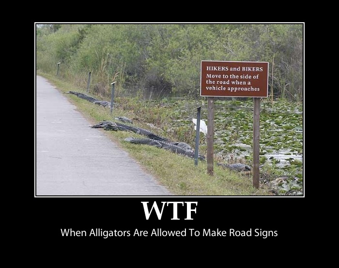 Funny Alligator Sign